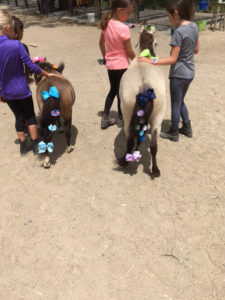 Decorating the Miniature Horses
