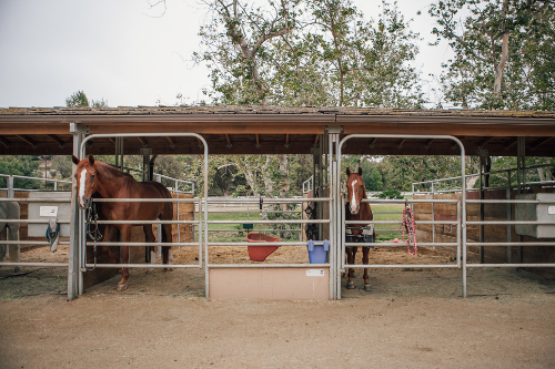 Outdoor Corrals
