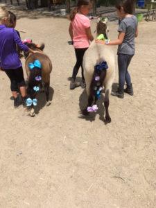 Decorating the Miniature Horses