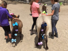 Decorating the Miniature Horses at Camp